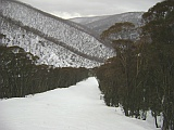 hotham blue ribbon run